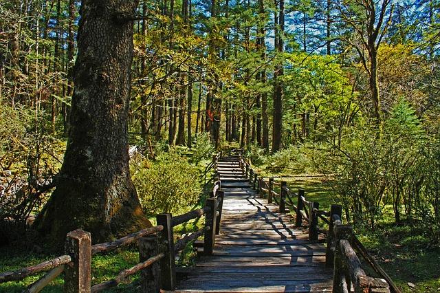 lesní park